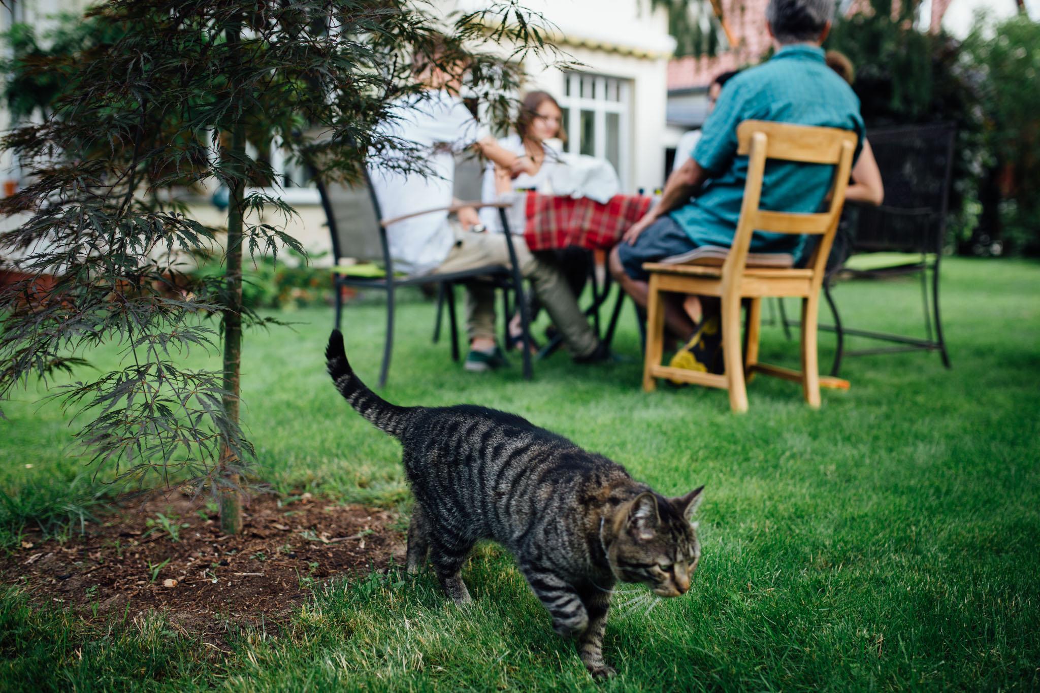 familienfotografie-berlin-reportagefotos-homestory-katze